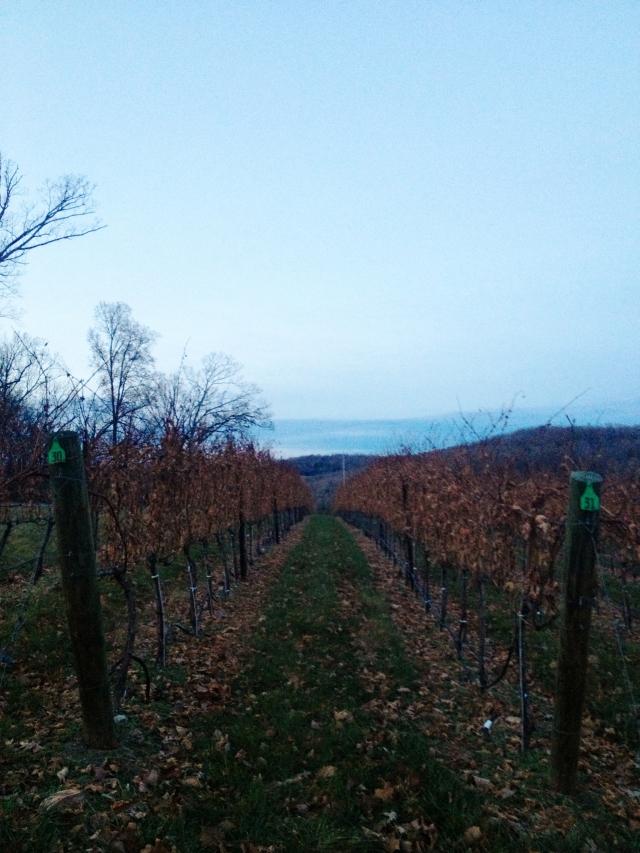 Fall wine tasting!